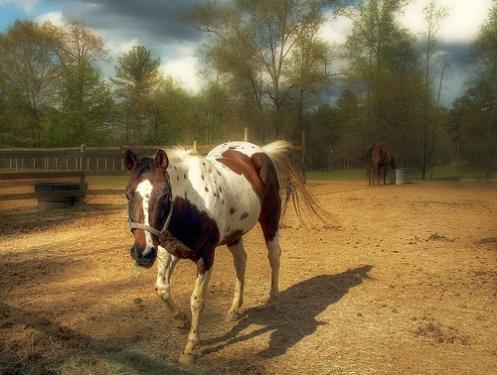 Orton Horse