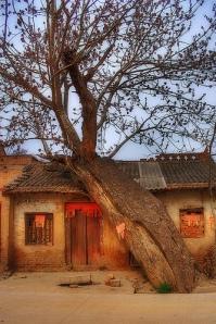 Xi'an Tree House